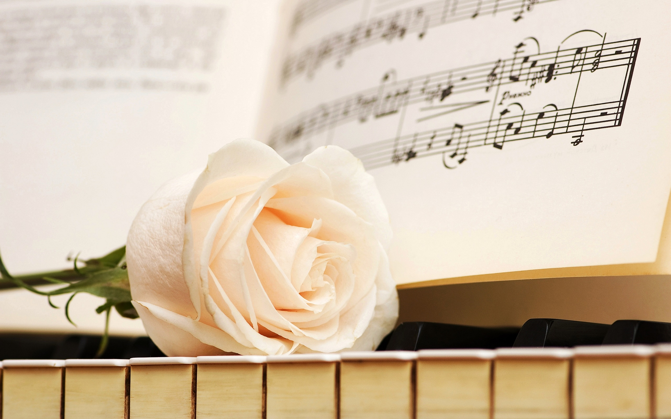 Cách Đọc Bản Nhạc, Cách Đặt Ngón